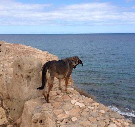 Hundehaftpflichtversicherung und Hundekrakenversicherung vergleichen
