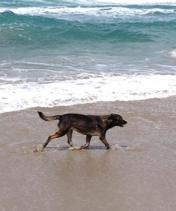Auslands-Krankenversicherung für Hunde